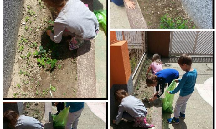 Ribice - uređivanje cvjetnjaka, zajednički rad, suradničko učenje, čupanje korova, sijanje sjemenki, zalijevanje
