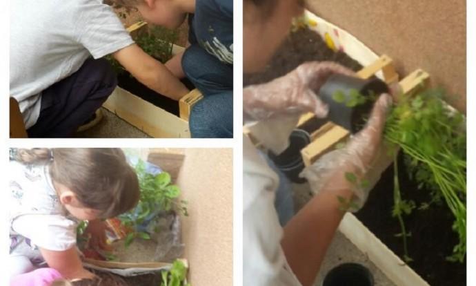 Ribice - obrađivanje vrta u sklopu eko-projekta, usitnjavanje zemlje, sađenje, zalijevanje, upoznavanje različitih vrsta biljaka, motorički i spoznajni razvoj