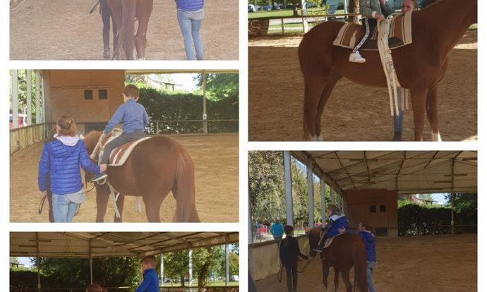 Na tečaju jahanja, posjet stajama, prehrana, održavanje dlake i kopita, prijevoz životinja, vođenje na ispašu, briga za konje, priprema konja za jahanje