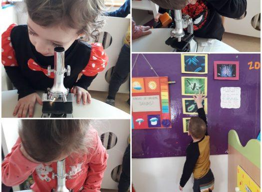 Leptirići - proučavanje kose kroz mikroskop u sklopu projekta Higijena, razvoj spoznaje, okulomotorike