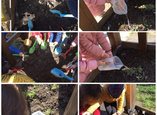 Leptirići - aktivnost u sklopu odgoja za održivi razvoj, sadnja proljetnica u našem parku, razvoj suradničkog učenja i međusobnog pomaganja te briga za biljke
