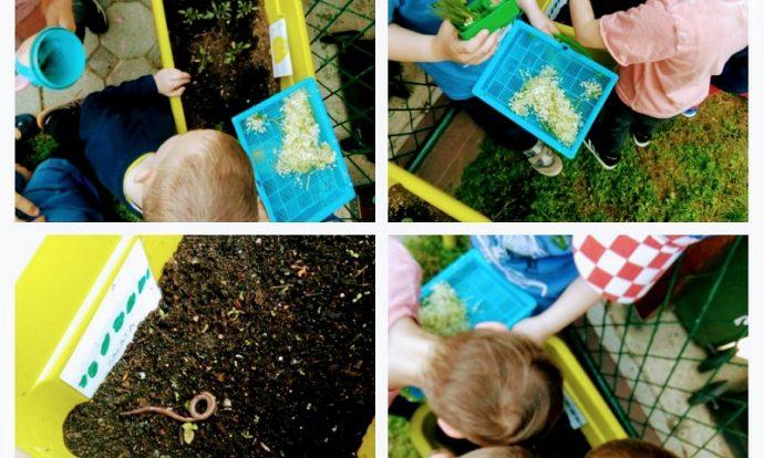 Ribice - boravak u parku, proučavanje gliste u povrtnjaku uz ragovor o ulozi glista u tlu, razvoj spoznaje i brige za prirodu