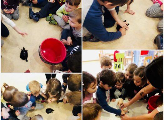 Leptirići - kućni ljubimac u skupini, promatranje i opisivanje kornjače, razvoj empatije i brige za druge