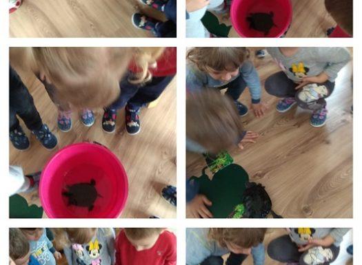 Zečići - Kornjača u skupini, poticaj razvoja empatije, brige za životinje te promatranje karakteristika kornjače
