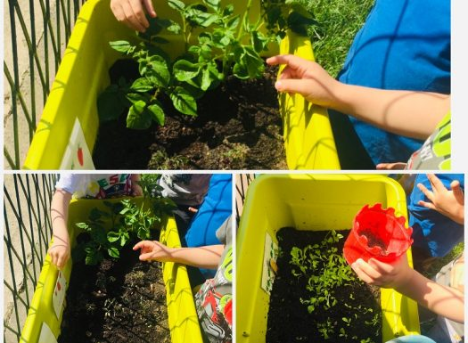 Leptirići - briga za mini - povrtnjak, zalijevanje biljaka i promatranje promjena