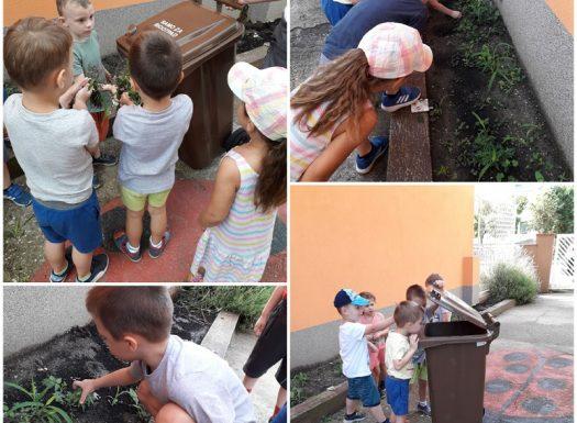 Leptirići i Ribice - briga o cvjetnjaku, čupanje korova, poticanje na očuvanje okoliša, razvoj suradnje