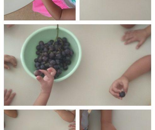 Leptirići - istraživačka i likovna aktivnost na temu grožđe, poticanje istraživanja sa svim osjetilima, razvoj govora, kreativnosti i spoznaje