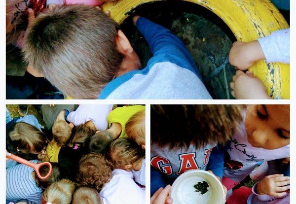 Ribice - Istraživačke aktivnosti za vrijeme boravka na zraku, situacijski poticaj, pronalazak žabice, razvoj spoznaje o vodozemcima