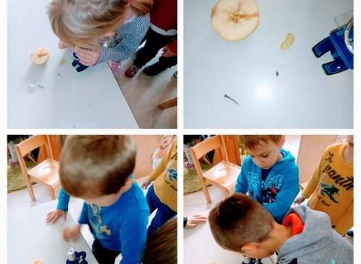 Ribice - research activity, Apple Day, studying the small parts of an apple with microscope