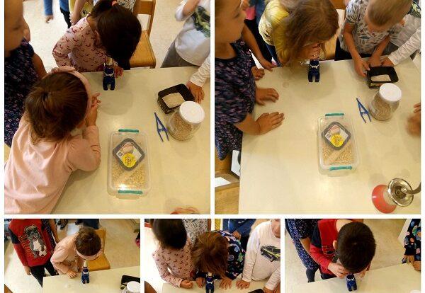 Ribice- istraživačke aktivnosti promatranja zrnaca brašna pod mikroskopom; razvoj spoznaje o odnosu veličina, poticanje znatiželje